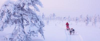Opzoek naar bijzondere Lapland reizen? Boek dan via Xplore the North!